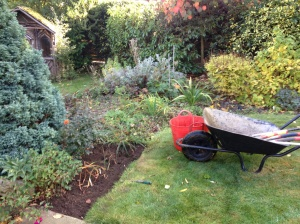 Poppy border before